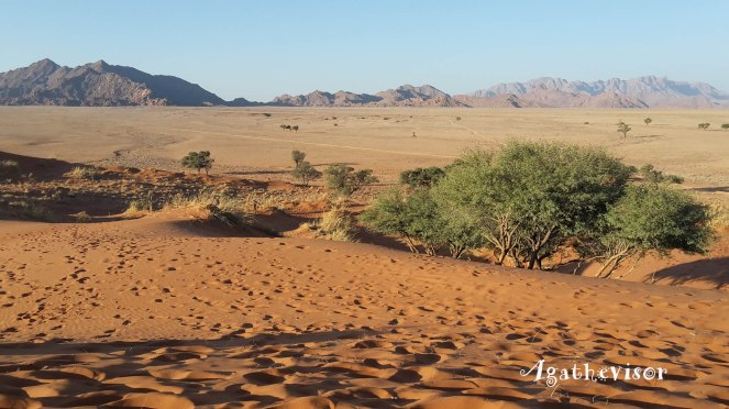 2016NA0446-Sesriem Sossusvlei-Elim Dunes-Panorama-50 Mn moins que camescope